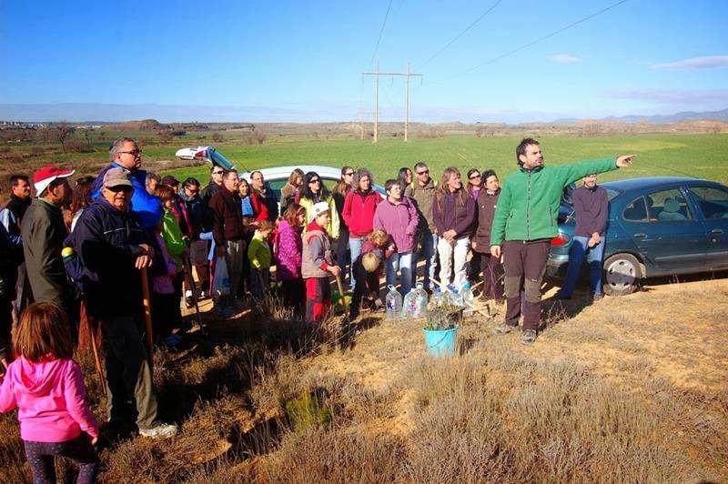 Plantación de carrascas en Quicena